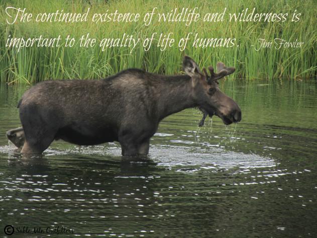 wildlifequotecontact